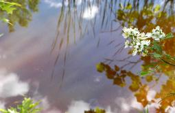 Interdimensional Worlds - water, sky reflection and flowers