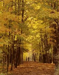 People walking down long trail with yellow and gold autumn leaves