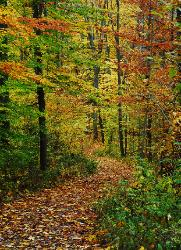 Winding trail through brilliant fall colored forest