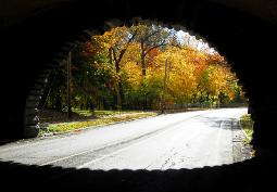 Brilliant sunlit Autumn trees photographed through a tunnel