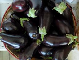 Market basket of black eggplant