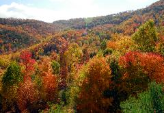 Boone, North Carolina Autumn Photograph