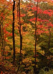 Red and yellow fall forest in Ohio