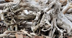 photograph of drift wood tree trunks and roots forming an abstract image