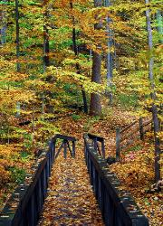 Fall walk across the bridge - Autumn in the Cuyahoga Valley National Park crossing a trail bridge