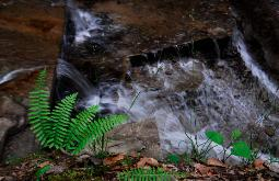 photograph of Buttermilk Falls with ferns in the Cuyahoga Valley National Park, Ohio