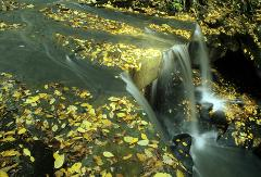 waterfall with yellow leaves