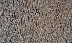 Photograph of intricately symetrical patterns in sand from the waves with three bird footprints across the top fo the sand taken in Malibu, Californai