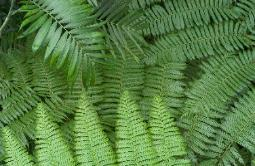 Photograph of a green convergence of ferns forming an abstract image